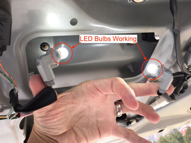 LED bulbs correctly inserted